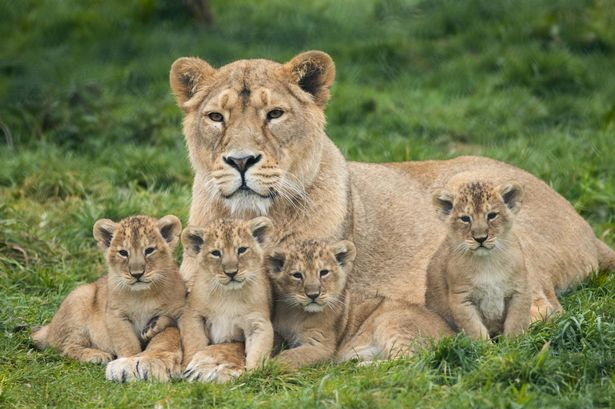 Fota Island Wildlife Park
