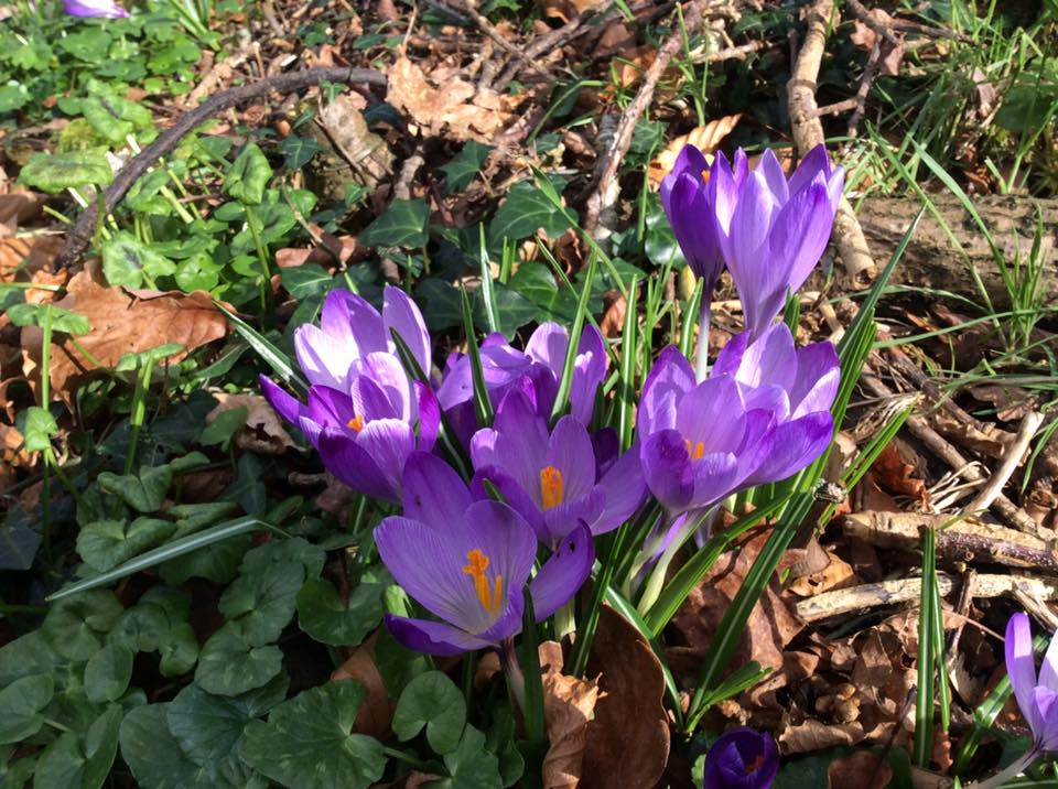 Explore Spring Flowers And Wildlife With Rent An Irish Cottage
